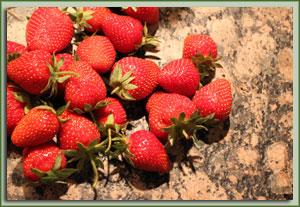 wieder da mit Erdbeeren